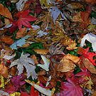 Autumn Carpet by KeepsakesPhotography Michael Rowley