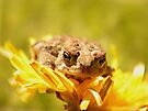 Little Toad And His Dandelion Bed by Shelly Harris