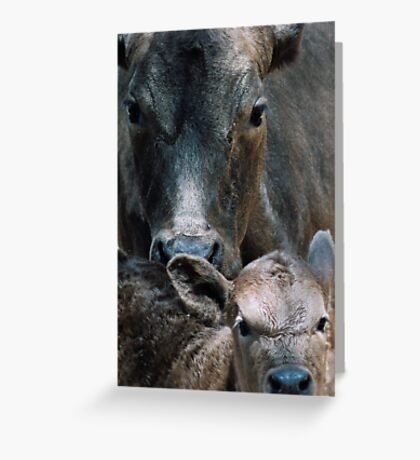 """Maternal"" Greeting Card"