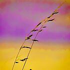 summer grass 17 by vigor