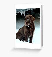 So this is winter ? Greeting Card