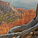 Bryce and tree by Linda Sparks