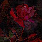 Radiance by Elaine Teague