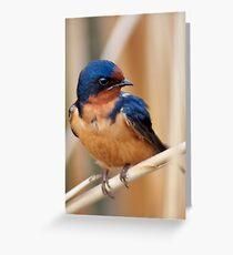 Barn Swallow in an Ontario Marsh Greeting Card