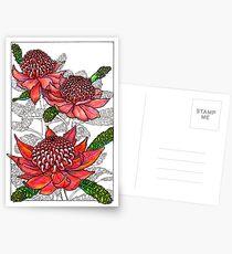 Australian Flower Series - Waratah Colour Postcards