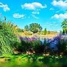 Der Teich von TJ Baccari Photography