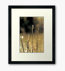 RI grass Framed Print
