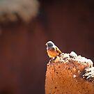 Moroccan Bird 2 by sparrowdk