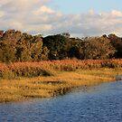 Winter Tallow Creek by byronbackyard