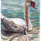 White Swan and Cygnet by Meaghan Roberts