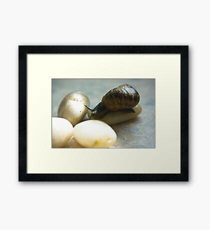 Snail #4 Framed Print