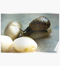 Snail #4 Poster