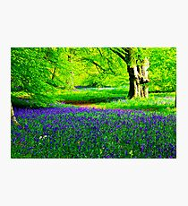 Bluebell Wood - Thorpe Perrow #2 Photographic Print