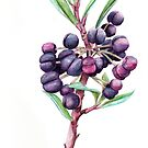 Pepperberry Bush by Meaghan Roberts