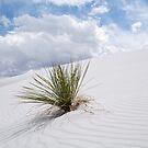 White Sands Dune by Mitchell Tillison
