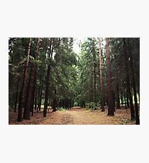 Pine tree summer forest Photographic Print