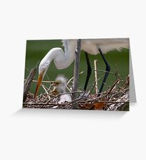 Little Egrets in the Nest Greeting Card
