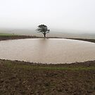 Pond, South Downs by rightonian
