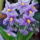 Lovely little purple flowers by Marjorie Wallace