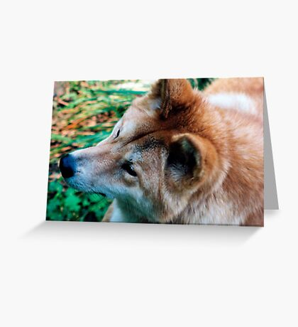 """Australian Dingo"" Greeting Card"