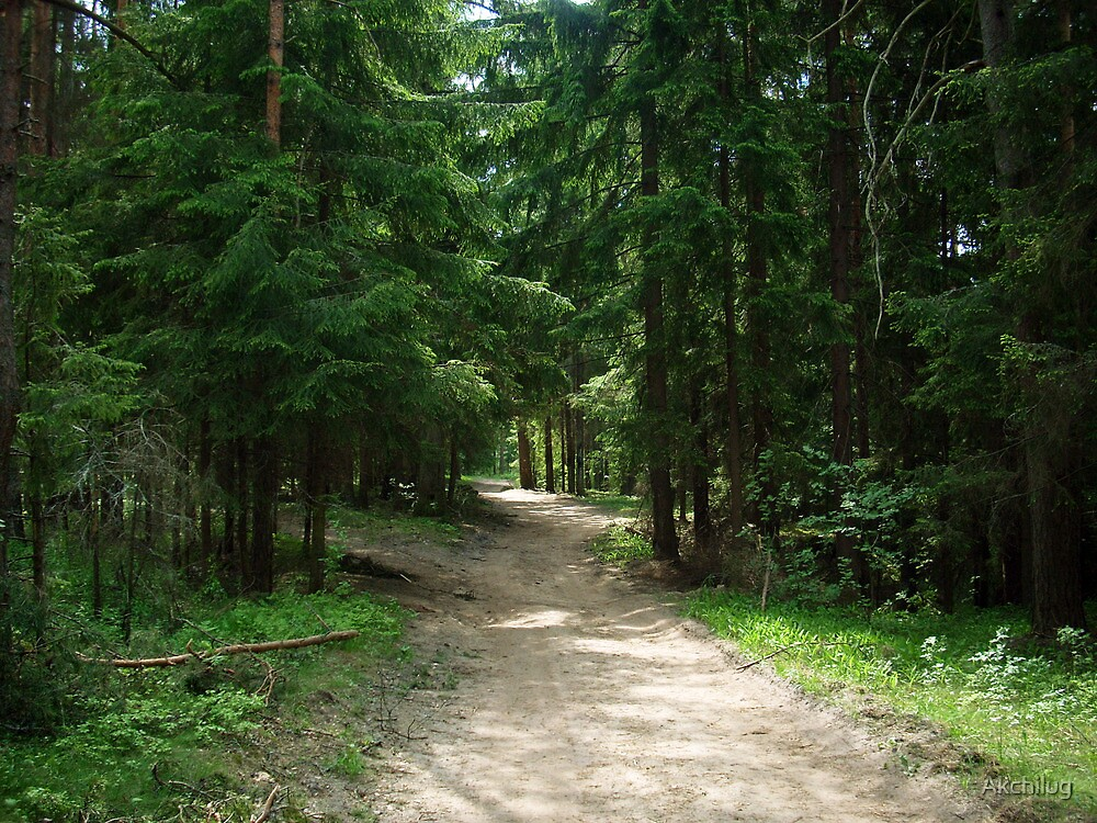 Russian Forest 49