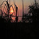 Intracoastal Sunrise by mojo1160