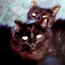 Mutter liebt ihre Kätzchen von SherriOfPalmSprings Sherri Nicholas-