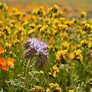 Wildflowers in Bloom by Mariola Szeliga