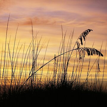 Grass Shadows by sunsetnurveins