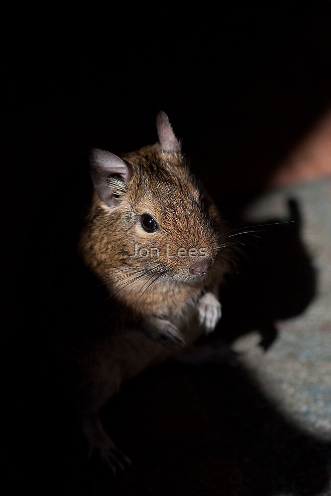 Degus by Jon Lees