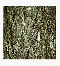 Bark in the forrest 2 Photographic Print