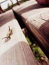 Weird Caterpillars by schizomania