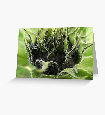 """Sunflower Babys"" Greeting Card"