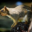 Curious Squirrel by Xcarguy