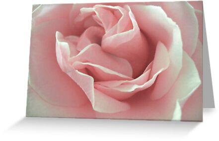 Pink Beauty. by Vitta