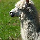 Alpaca #1 by MarianaEwa