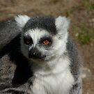 Ring-tailed Lemur #1 by MarianaEwa