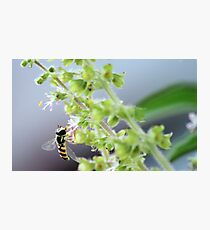 Nature's merry minion Photographic Print