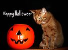 Happy Halloween by FrankieCat