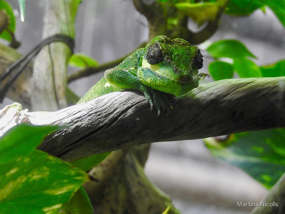Knight Anole Lizard by Martina Nicolls