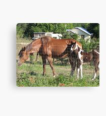 Staying right with Mom Canvas Print