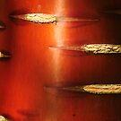 Shiny Chinese Red Birch by Derek McMorrine