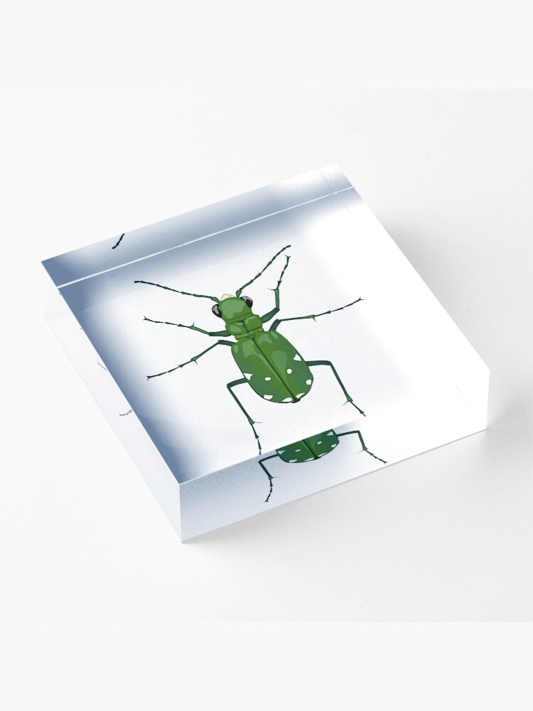 Alternate view of  Six-spotted green tiger beetle, Cicindela sexguttata Acrylic Block