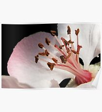 Colors of Nature - Blossom 001 Poster