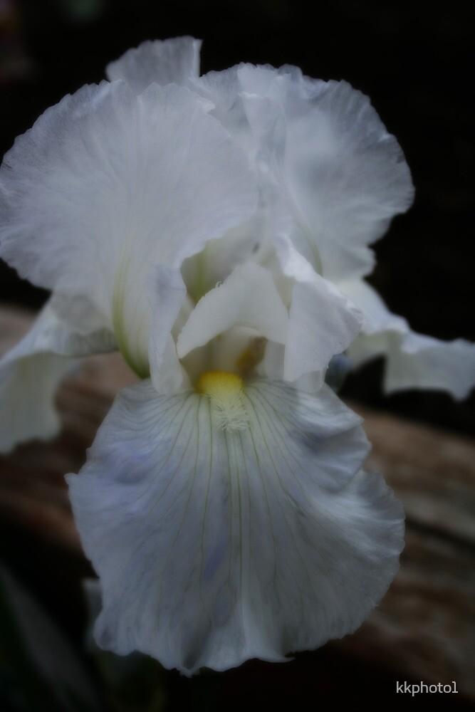 Snow White Iris by kkphoto1