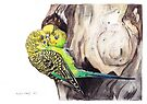 Budgies by Meaghan Roberts