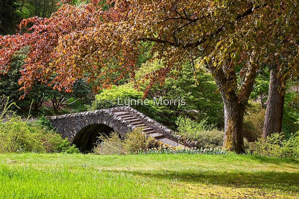 A Botanical Walk by Lynne Morris