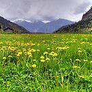german meadow by Daidalos