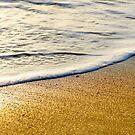Golden Sand on Plum Island by danachirps