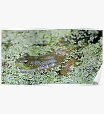 Epson Salts for Frogs Poster